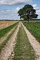 Haythill Lane, near Feltwell - geograph.org.uk - 1439397.jpg