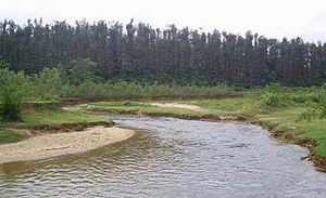 Hemavati River -  River Hemavati at the southern side of Banakal
