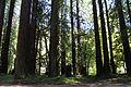 Hendry Woods State Park - Stierch 01.jpg
