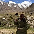 Himalayan Mountain Yak.jpg