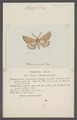 Himera - Print - Iconographia Zoologica - Special Collections University of Amsterdam - UBAINV0274 058 01 0043.tif