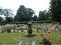 Hokkaido University botanical garden rose.JPG