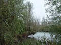Hollandse Biesbosch 19-10-08 - panoramio.jpg