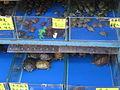 Hong Kong Goldfish Market IMG 5485.JPG