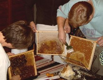 Honey super - Beeswax being scraped off the honeycombs in the honey supers