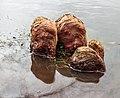 Hoog water in de Friese boezem. 26-02-2020. (d.j.b) 07.jpg