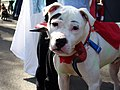 Horndog (2956777037).jpg