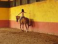 Horse-Riding-07837-nevit.jpg