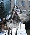 Horse drawn Sleigh.jpg