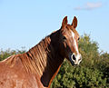 Horse in autumn sun (5089765157).jpg