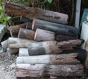 English: Wooden stumps extracted in 2007 from ...