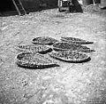 """Hruške sušijo na lesah (""""leisah"""") iz srebota, Manče 1958 (2).jpg"""