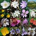 Hujiwaradake flowers 2008 5 6.JPG