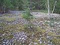 Hummelmoraberget, klapperstensvallar, 2015f.jpg