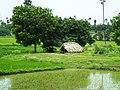 Hut in the field.jpg