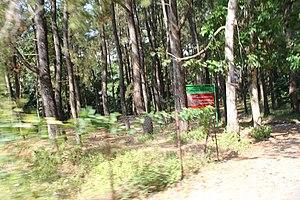 Hutan Negara TN Gunung Ciremai (1).jpg