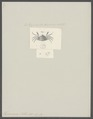 Hymenosoma mathei - - Print - Iconographia Zoologica - Special Collections University of Amsterdam - UBAINV0274 094 08 0002.tif