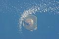ISS-34 Tristan da Cunha.jpg