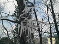 Ice Branches, Murree.jpg