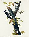 Illustration from Birds of America (1827) by John James Audubon, digitally enhanced by rawpixel-com 132.jpg