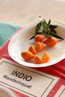 Orangequat Hybrid Species of fruit and plant