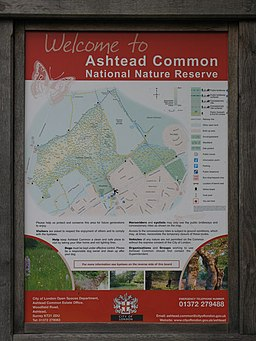 Information board on Ashtead Common - geograph.org.uk - 937809