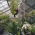 Interieur oranjerie met de tuinman aan het werk - Voorschoten - 20406311 - RCE.jpg