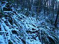 Interlaken-Ferns-in-the-snow-2895.jpg