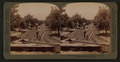 Irrigating an orange grove, Riverside, California, from Robert N. Dennis collection of stereoscopic views.png