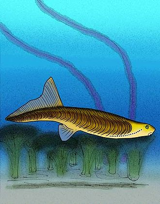 Lamprey - Jamoytius kerwoodi, a putative lamprey relative from the Silurian