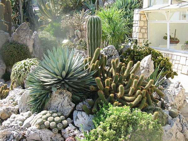 Botanical gardens in monaco for Botanic com jardin