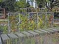 Jardin des Géants à Lille - Murs végétalisés - panoramio (1).jpg