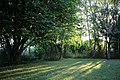 Jardin fin de journée.jpg