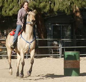 Barrel racing - Training the pattern