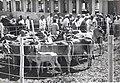 Jawaharlal Nehru visiting a Goshala during his Gujarat tour in 1949.jpg