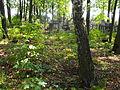 Jewish cemetery Smolevichi 1k.jpg