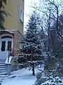 Karácsonyfa az Angolai Köztársaság Nagykövetségének kertjében, 2016 Budapest.jpg