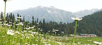 Kashmir summer