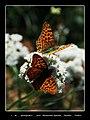 Kelebek Etkisi 003 - panoramio.jpg