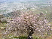 Kermanshah-above of mountain.JPG
