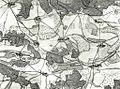 Kiesersche Forstkarte Nr. 151 Oppelsbom (Oppelsbohm).jpg