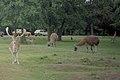 Knowsley Safari Park, Prescot (260220) (9620526978).jpg