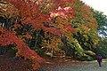 Kobe municipal forest botanical garden10s3200.jpg