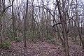 Korina 2015-03-29 Mahonia aquifolium.jpg