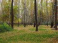 Kyiv Sovky Park8.JPG