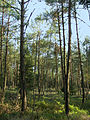 Lüneburger Heide - 064.jpg