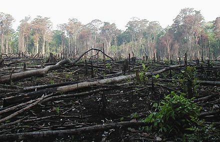 Area of the Lacandon Jungle burned to plant crops Lacanja burn crop.JPG