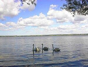 Lake Vištytis - View to the Lithuanian shore