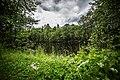 Lampi Laajanojalta (Vanhan rengas kaatopaikan aluetta) - panoramio.jpg