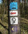 Lasy okolice Miaczynka (4).JPG